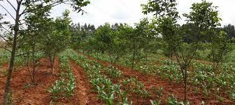 Reboiser et développer la filière biogaz en milieu rural dans le Yunnan    AFD - Agence Française de Développement