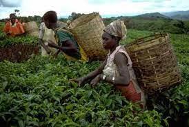 Les enjeux et défis de l'agriculture durable et de la sécurité alimentaire  en Afrique Subsaharienne | FratMat